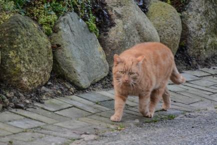 orange-cat-2
