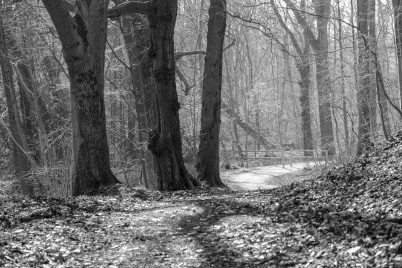 Forest path in Bad Oldesloe