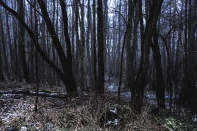 Reinfeld Forest