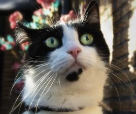 attentive cat