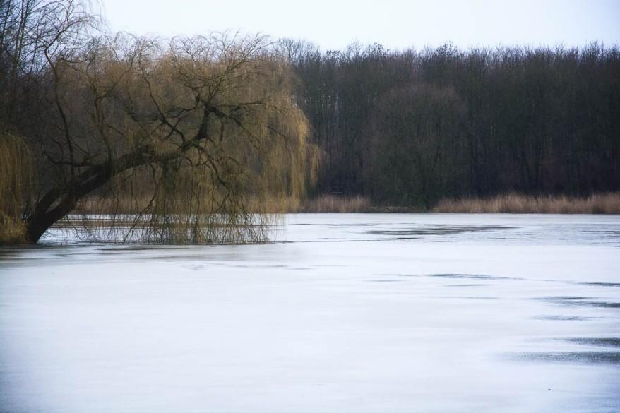 Reinfeld gefrorener Herrenteich