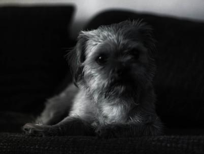 Charlie Portrait