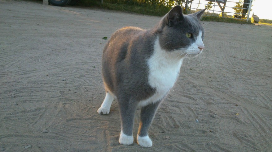 Farmer's Cat