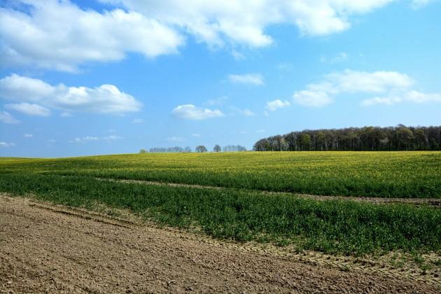 Reinfeld Fields