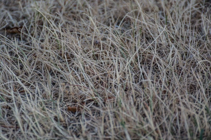 sunburned grass