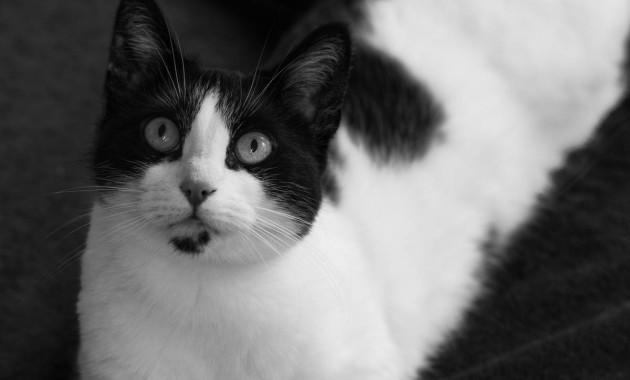 Beautiful Cat Shyna