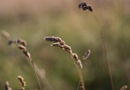 meadow snapshot