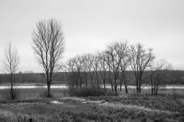 Reinfeld Black and White