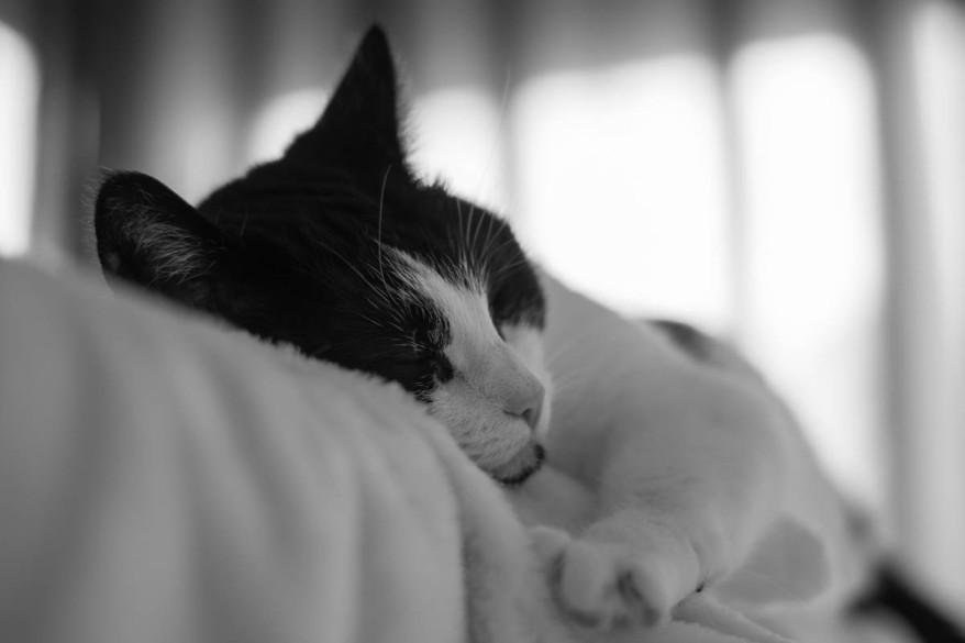 Shyna sleeps