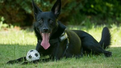 Beautiful Black Dog