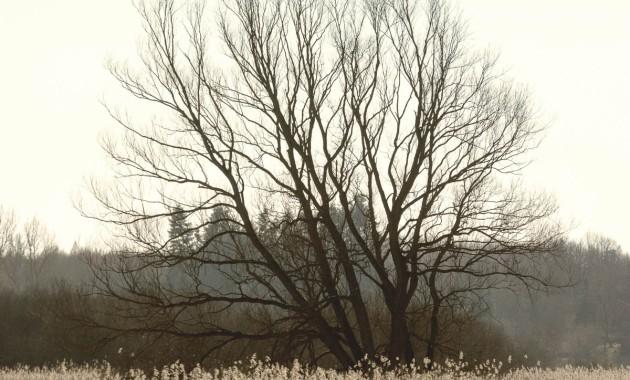 Bad Oldesloe - Brennermoor