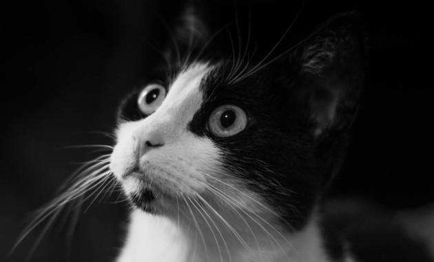 curious kitty shyna