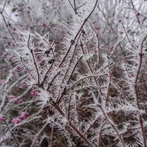 Winter Picture