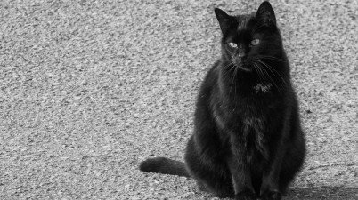 black outdoor cat