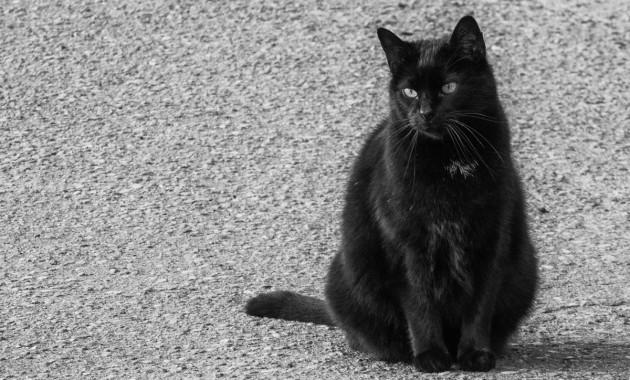 black outdoor cat