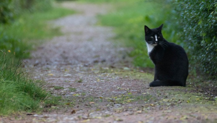 a black garden cat