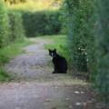 a black garden cat2