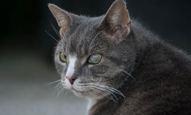 a cat blind in one eye