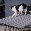 another cat on the roof 1