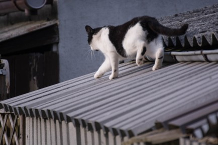 another cat on the roof