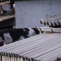 another cat on the roof2