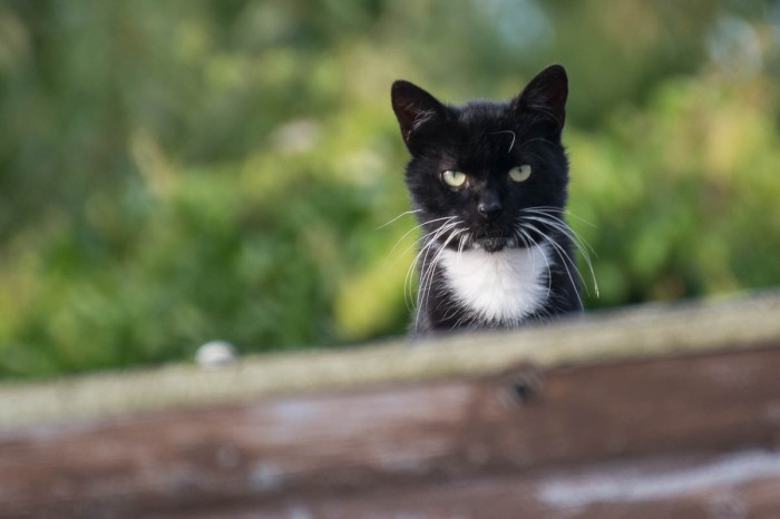 black and white cat on the roof