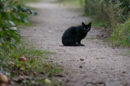 black cat prefers distance