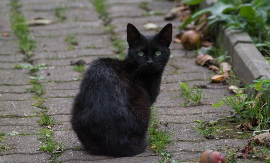 black kitty first photo