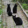 black kitty gang2