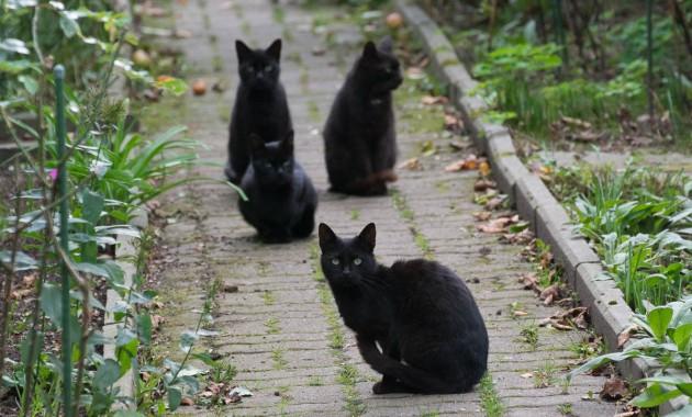 black kitty gang