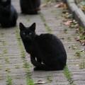 black kitty gang