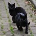 black kitty gang4