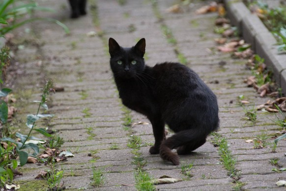 different black cats
