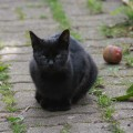 different black cats3