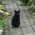 different black cats5