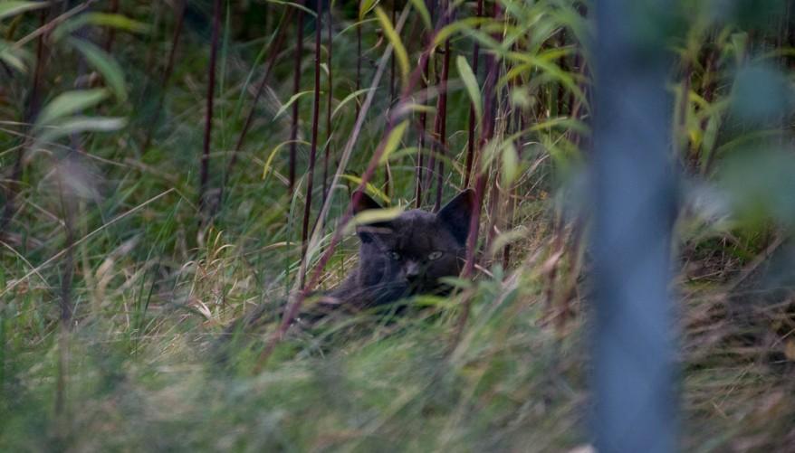 hidden black cat