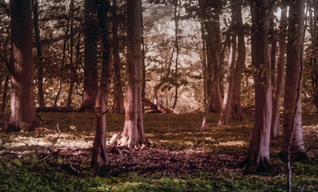 Surreal Forest Image