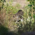 tabby cat in the garden2