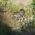 tabby cat in the garden 3
