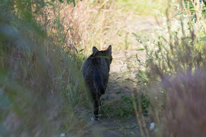 tabby cat walking away
