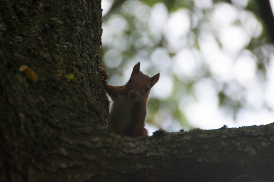 unedited squirrel