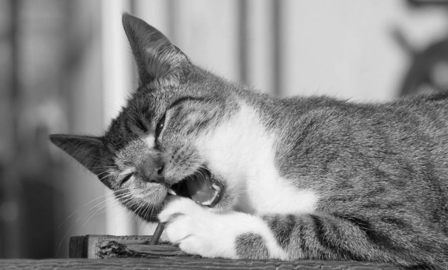 beautiful tabby cat photo