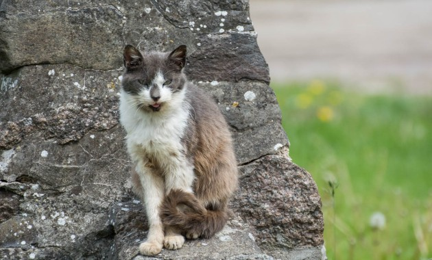 cat of a farmer