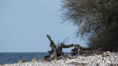 baltic sea photo