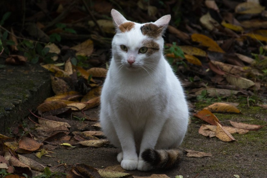 beautiful cat in the gardens