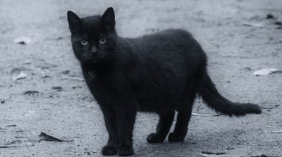 black kitty photo