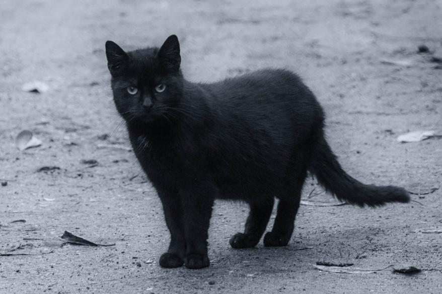 black kitty photo