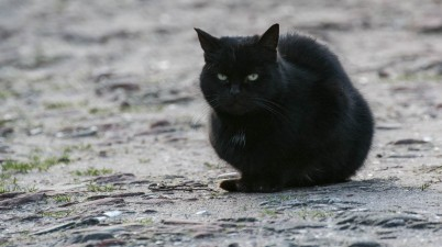 grumpy black kitty