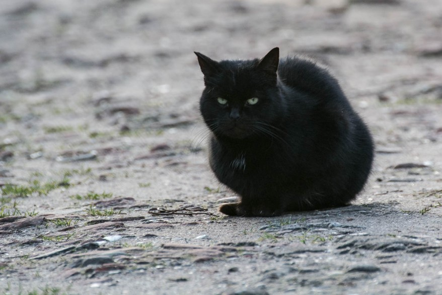 grumpy black kitty