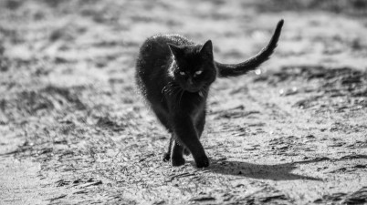 walking black kitty